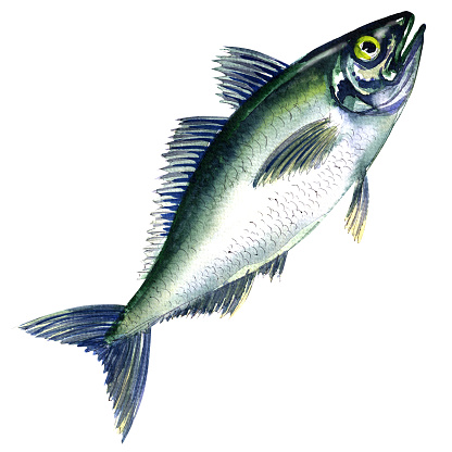 Horse Mackerel Clip Art, Vector Images & Illustrations.