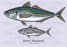 Horse Mackerel Stock Illustrations.