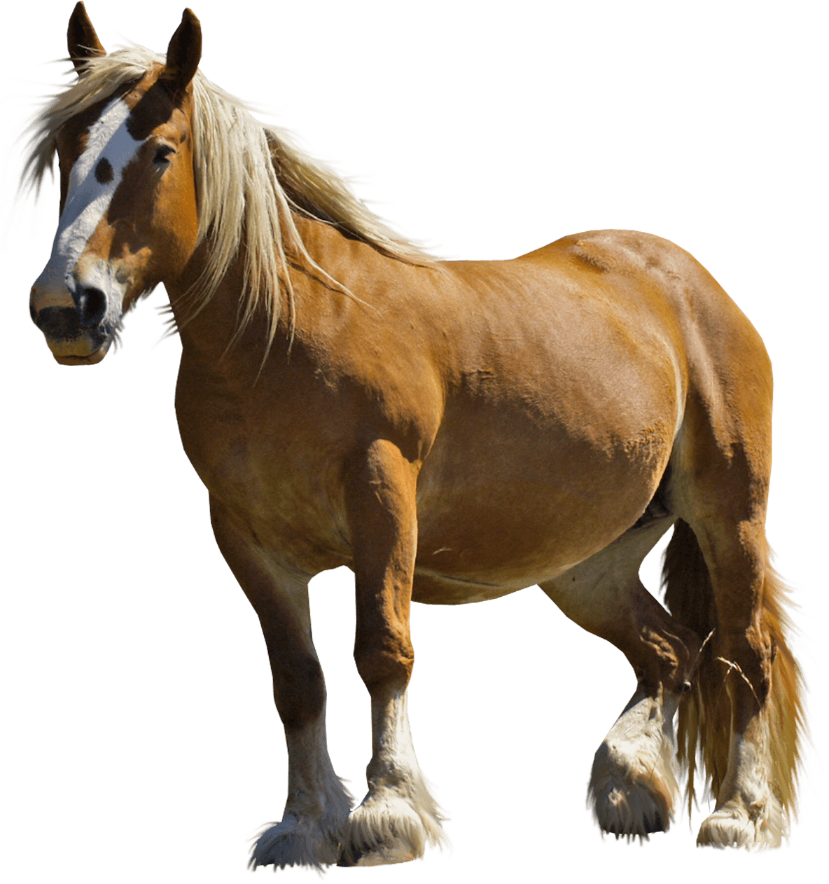 Farm Horse transparent PNG.