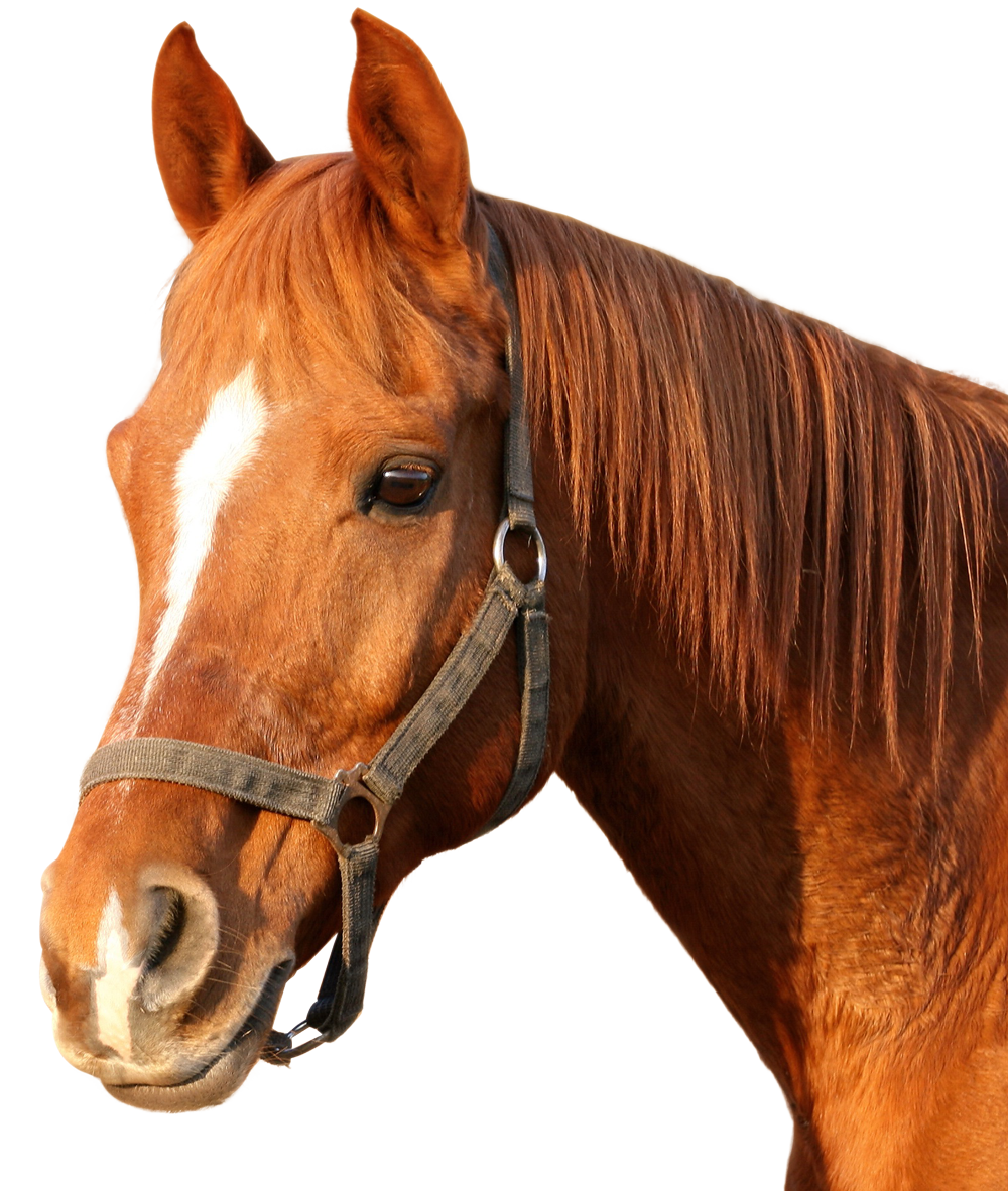 Horse PNG image.