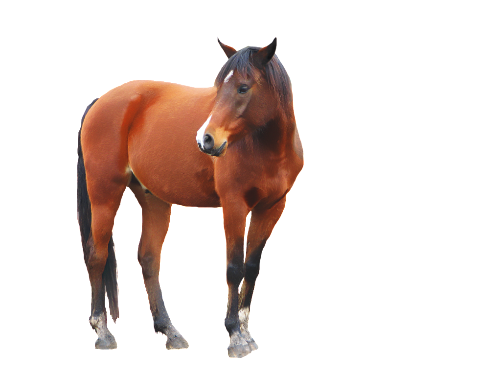 Standing Horse PNG Transparent Image #19.