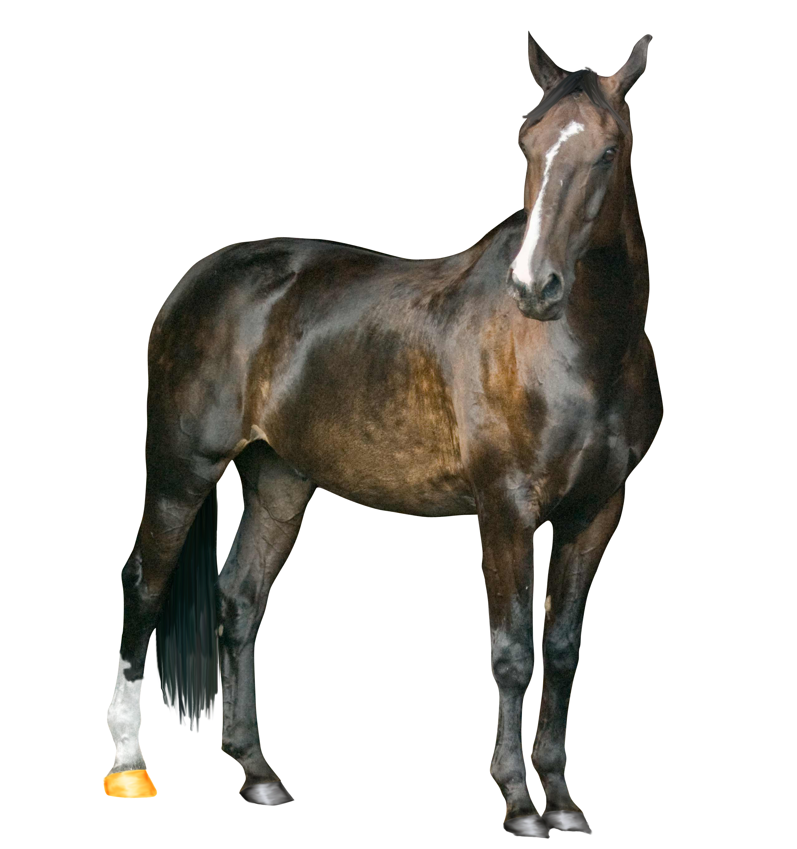 Horse PNG Image PNG Image.