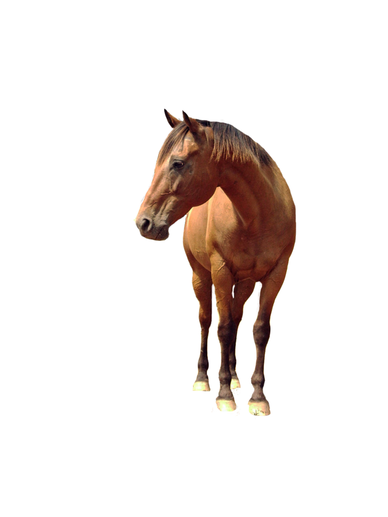 Download Horse PNG 6.
