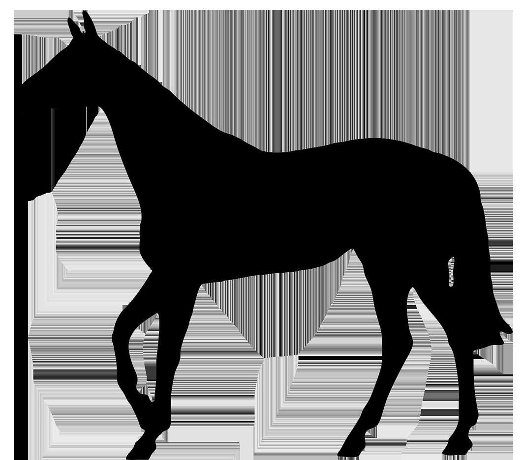 Horse Black Silhouette  #72991.