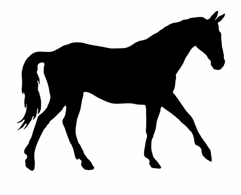 Silhouette Of Elegant Horse.
