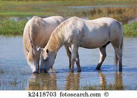 Horse pond Images and Stock Photos. 847 horse pond photography and.