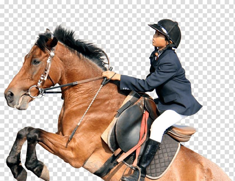 Horse Tack Equestrian Hunt seat, horse riding transparent background.