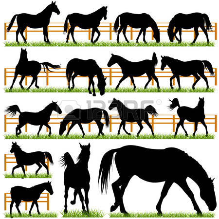 1,853 Horse Show Stock Vector Illustration And Royalty Free Horse.