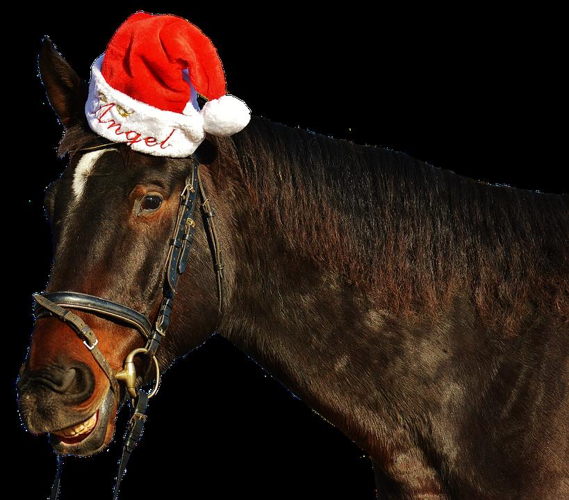 Download Free png Free photo Christmas Laugh Cute Grin Santa.