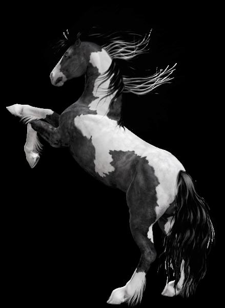 Horsea Clipart.