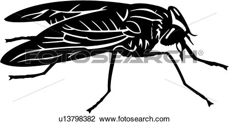 Clipart of , bugs, horse fly, insect, u13798382.