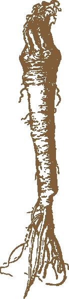 Horseradish clip art Free Vector / 4Vector.