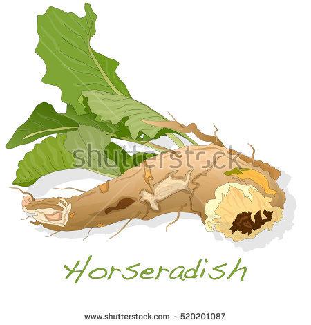 Horseradish Stock Photos, Royalty.