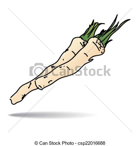 Horseradish Illustrations and Clip Art. 166 Horseradish royalty.