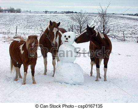 Stock Images of Horse Play.