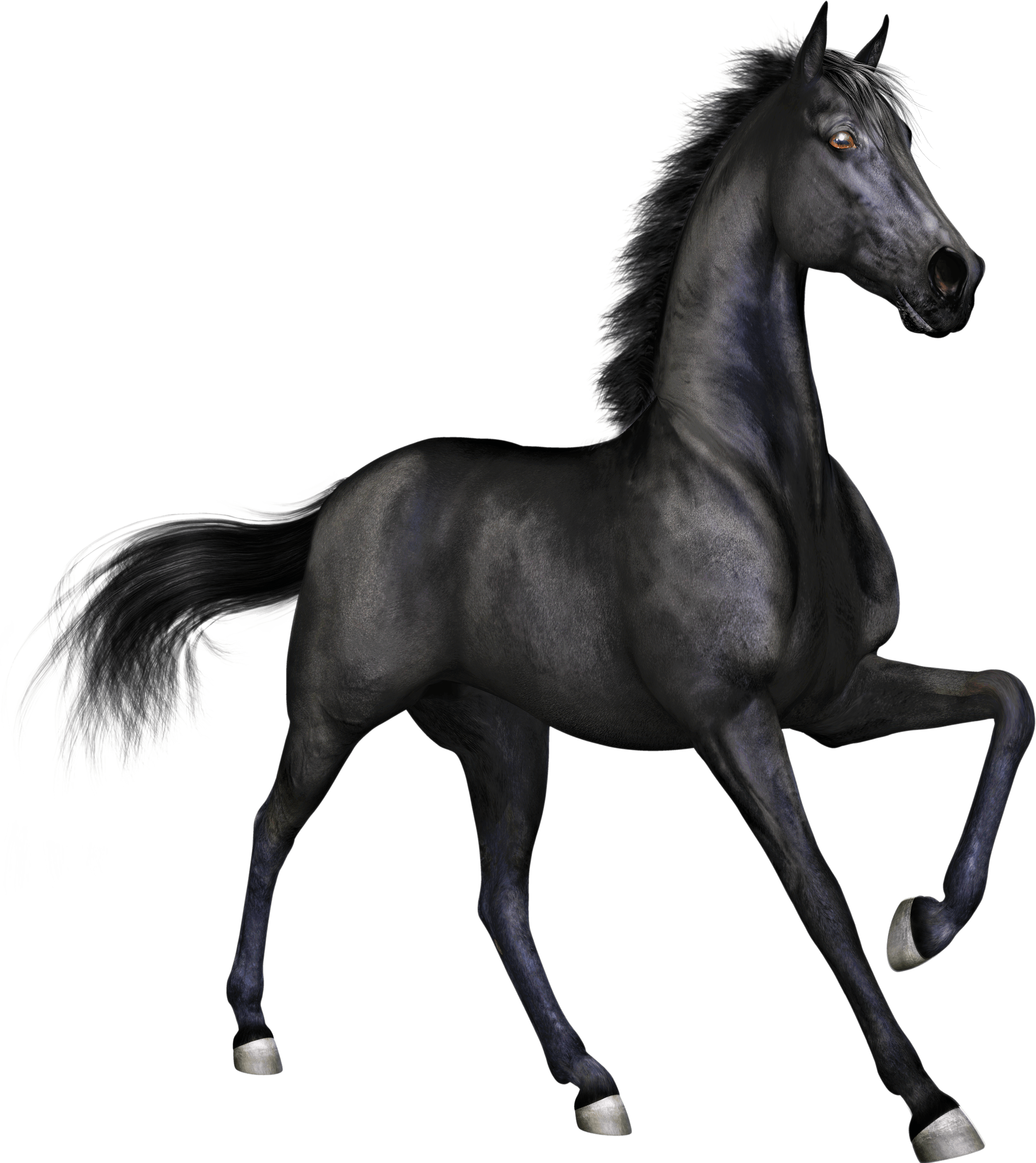 Black Race Horse transparent PNG.