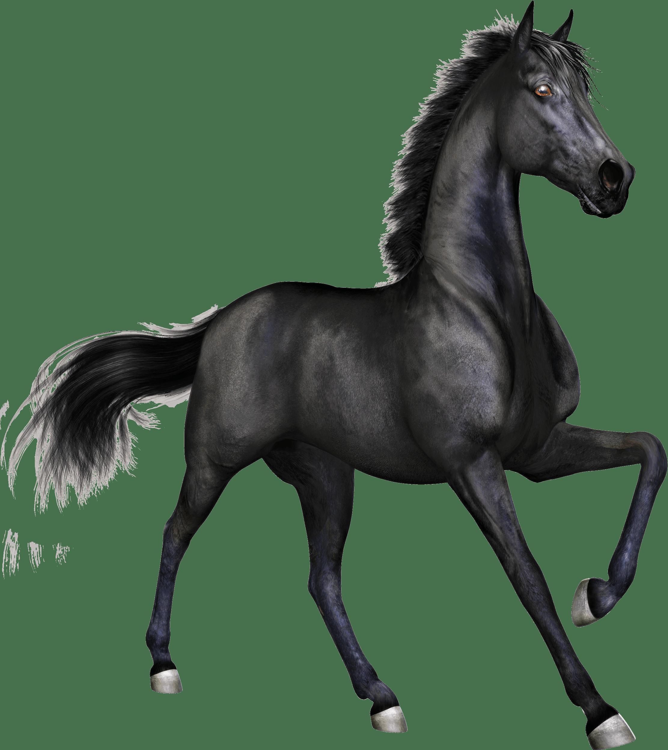 Black Race Horse transparent PNG.