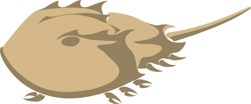 Gallery For > Horseshoe Crab Clipart.