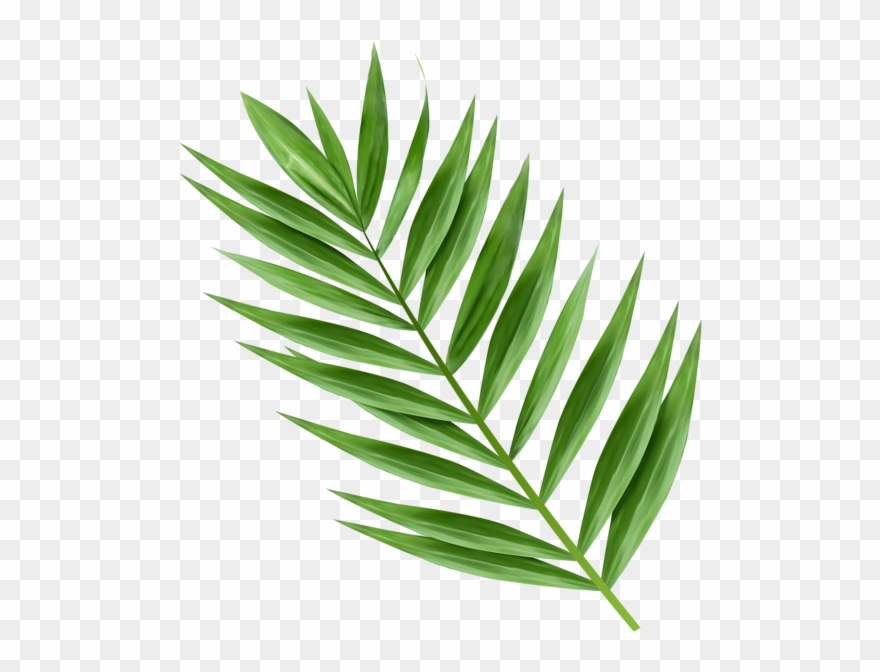 Hosanna Palm Branch Images.