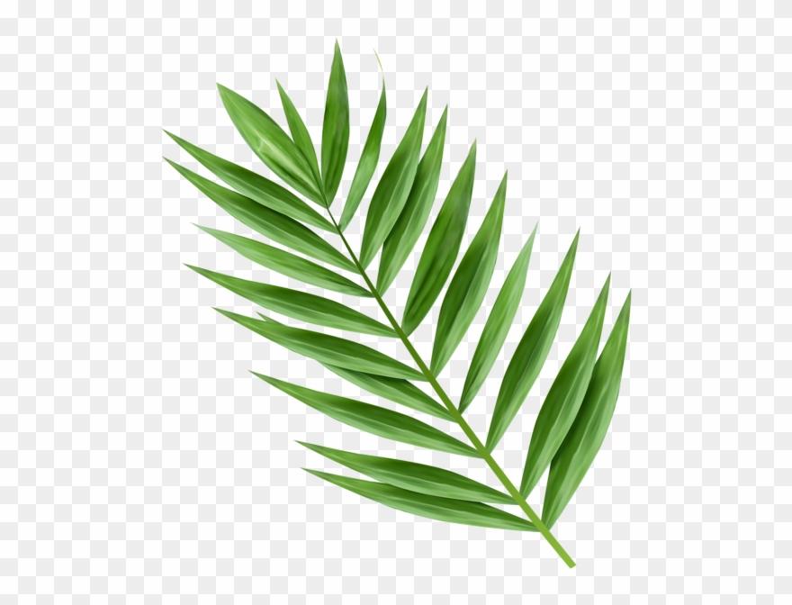 Hosanna Palm Branch Images.