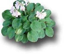 1000+ images about clipart plant on Pinterest.