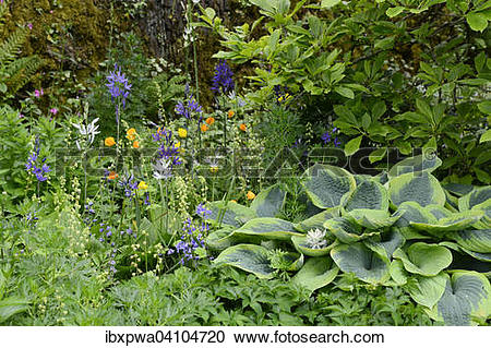 Stock Photography of Colorful flowering in a shady garden.