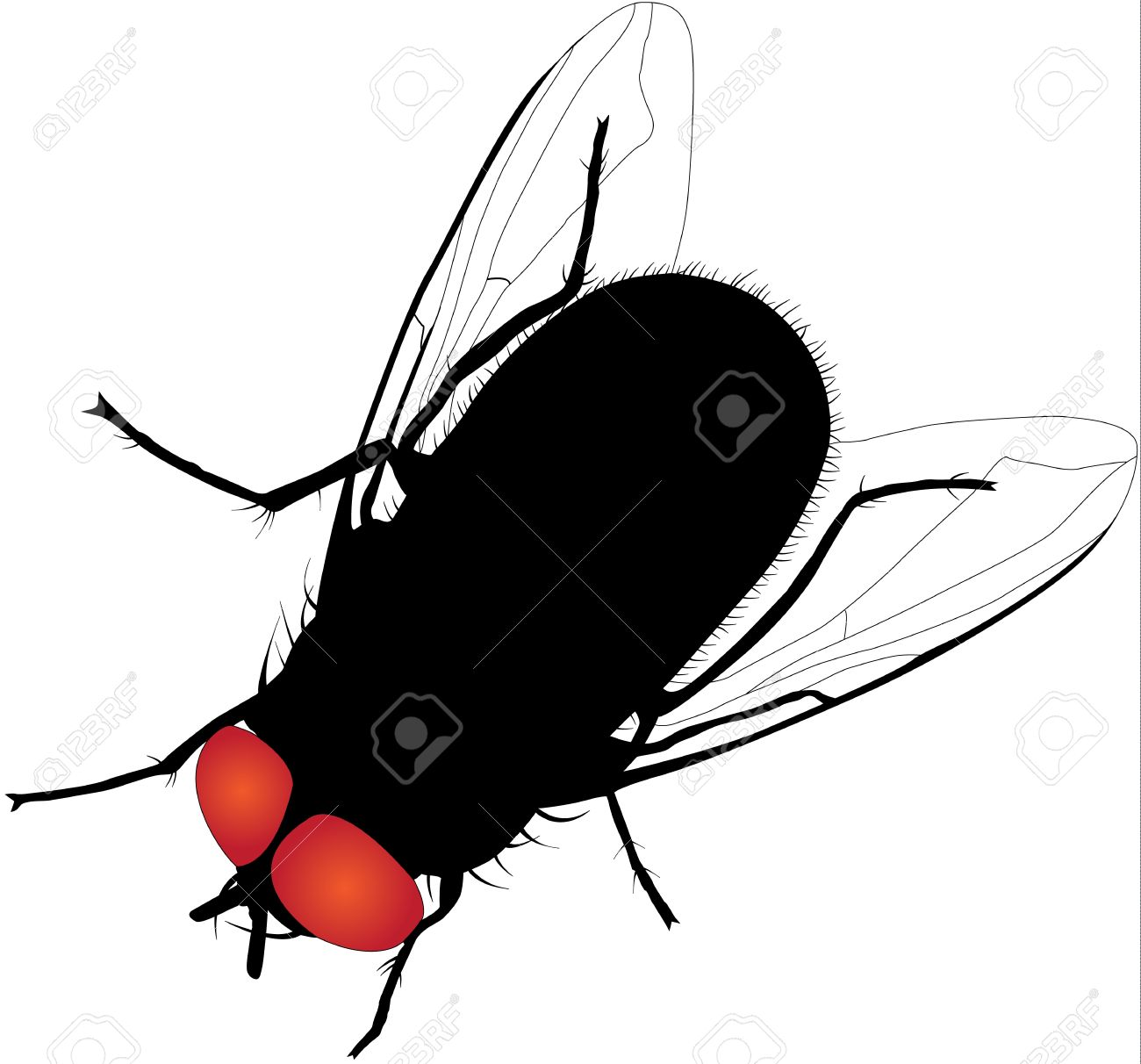 547 Housefly Cliparts, Stock Vector And Royalty Free Housefly.