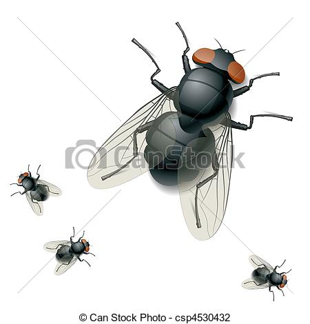 Housefly Illustrations and Stock Art. 359 Housefly illustration.