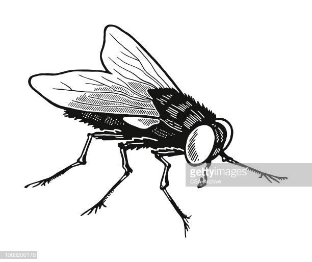 60 Top Housefly Stock Illustrations, Clip art, Cartoons, & Icons.