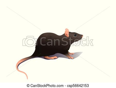 Common house mouse isolated on white background.