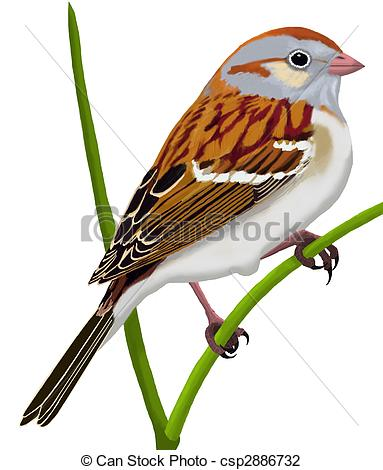 Sparrow Clipart and Stock Illustrations. 3,135 Sparrow vector EPS.