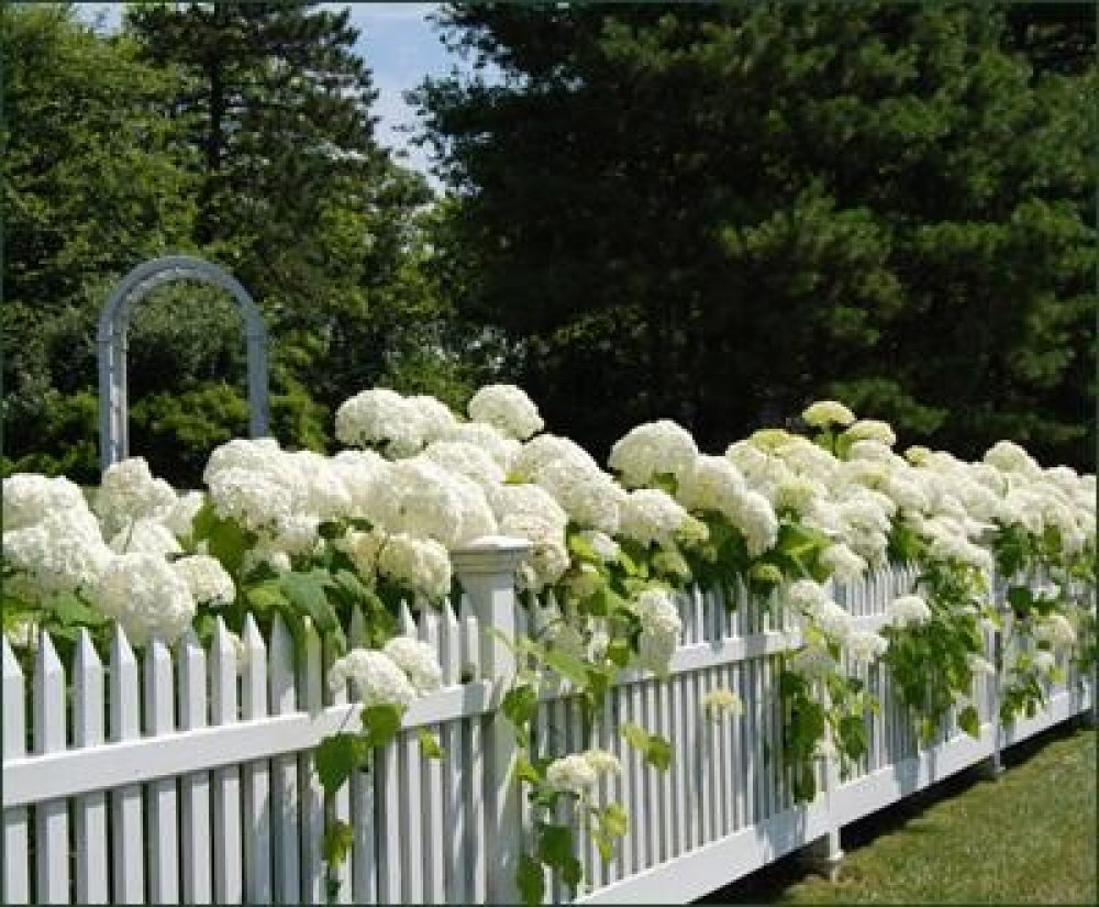 7 Marvellous White Picket Fences.
