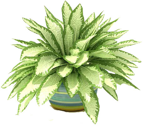 Similiar House Plant Clip Art Keywords.