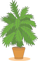 House plants clipart.