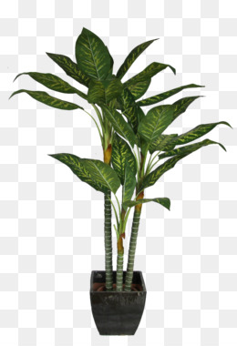 House Plant Png (104+ images in Collection) Page 3.