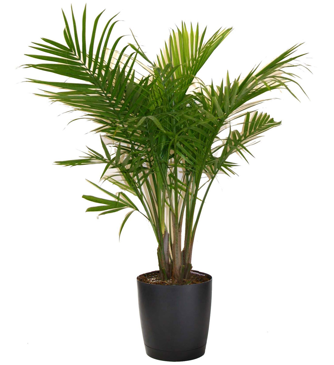Indoor Plant Png (109+ images in Collection) Page 3.