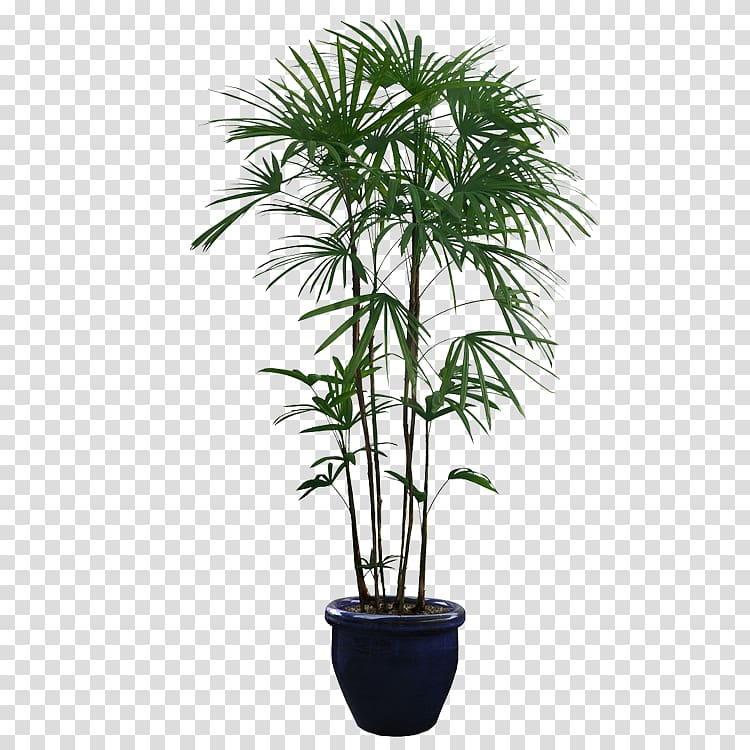 Houseplant transparent background PNG cliparts free download.