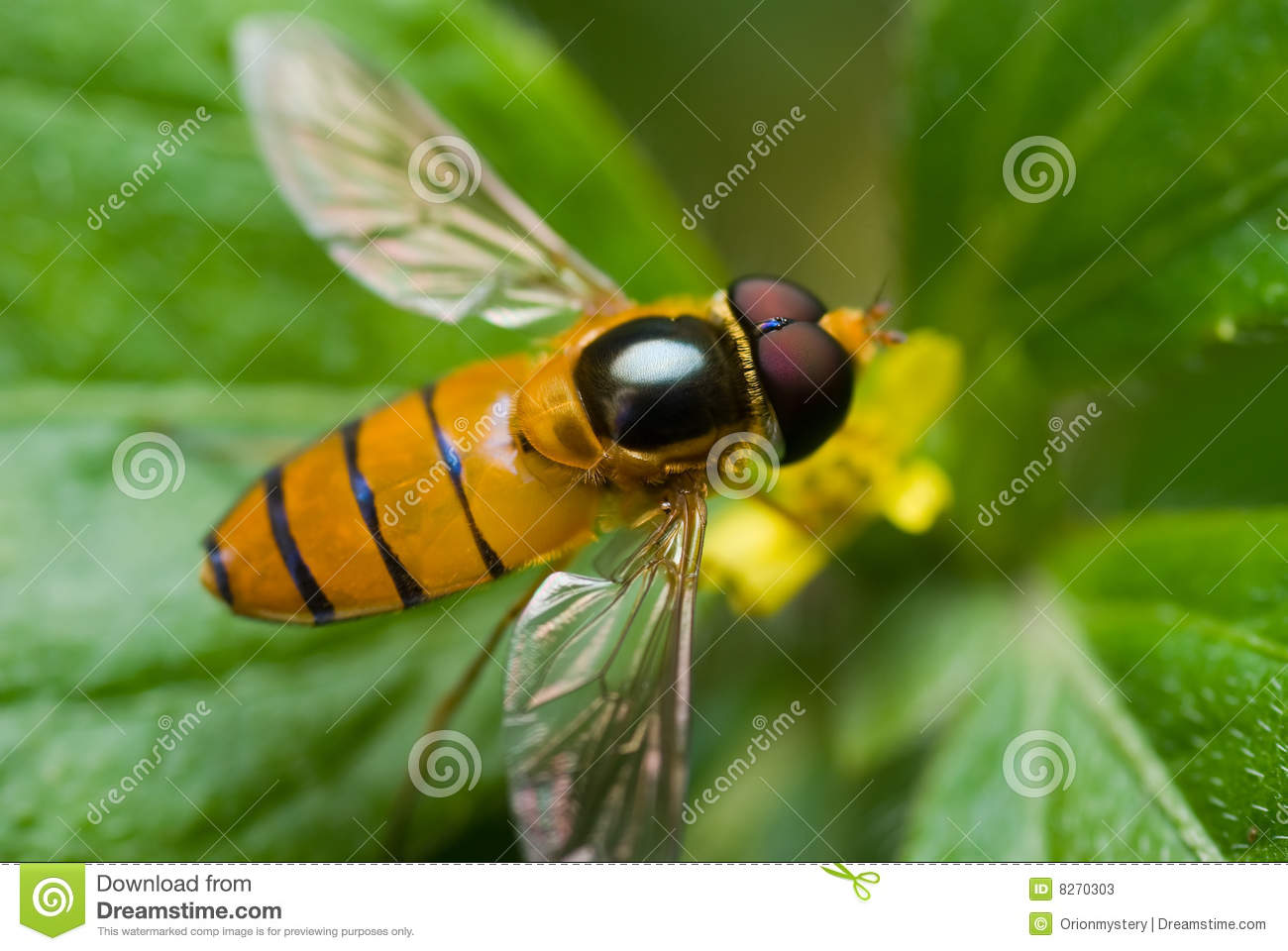 Hoverfly Yellow Flower Stock Photos, Images, & Pictures.