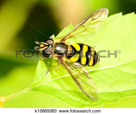 Stock Photo of Hover.