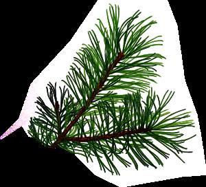 Pine Branch.