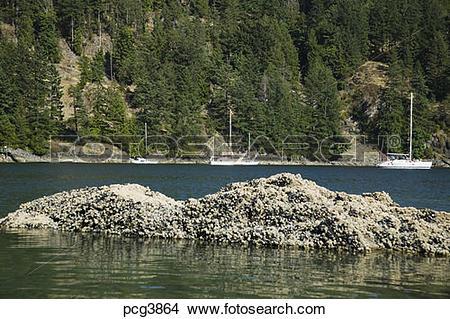 Stock Photo of Halkett Bay Gambier Island Howe Sound British.