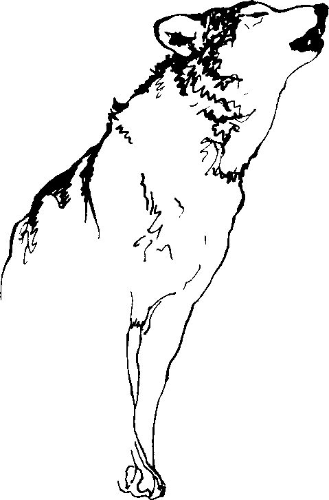 Howing Wolf Black And White Clipart.