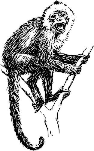 Free Monkey Breeds Clipart, 1 page of Public Domain Clip Art.