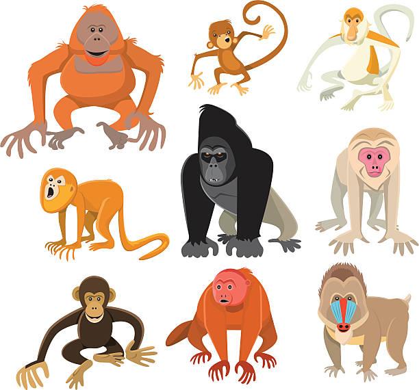 Howler Monkey Illustrations, Royalty.