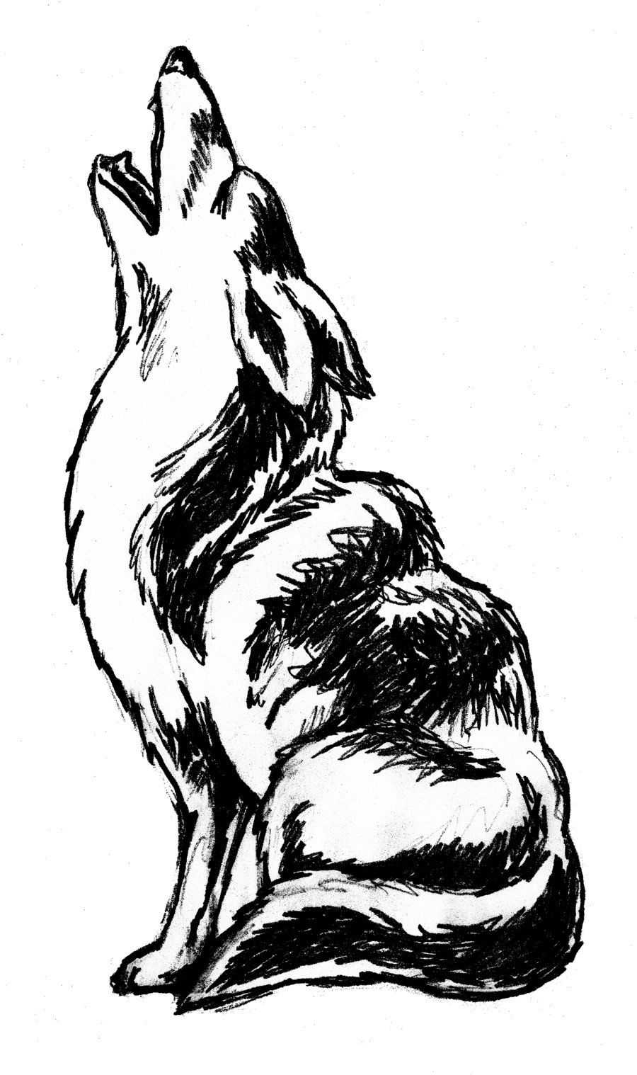 Coyote Howling Clip Art.