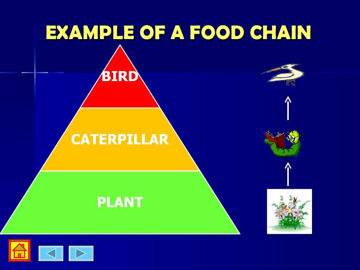 Food webs & food chain.