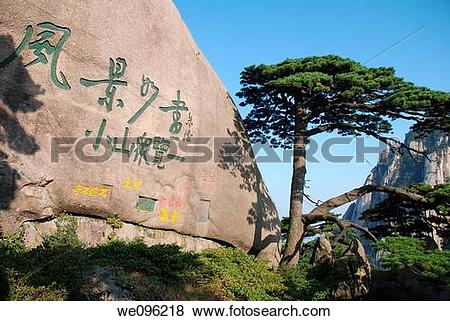 Pictures of Huangshan pine tree, Huangshan Mount Huang, Anhui.