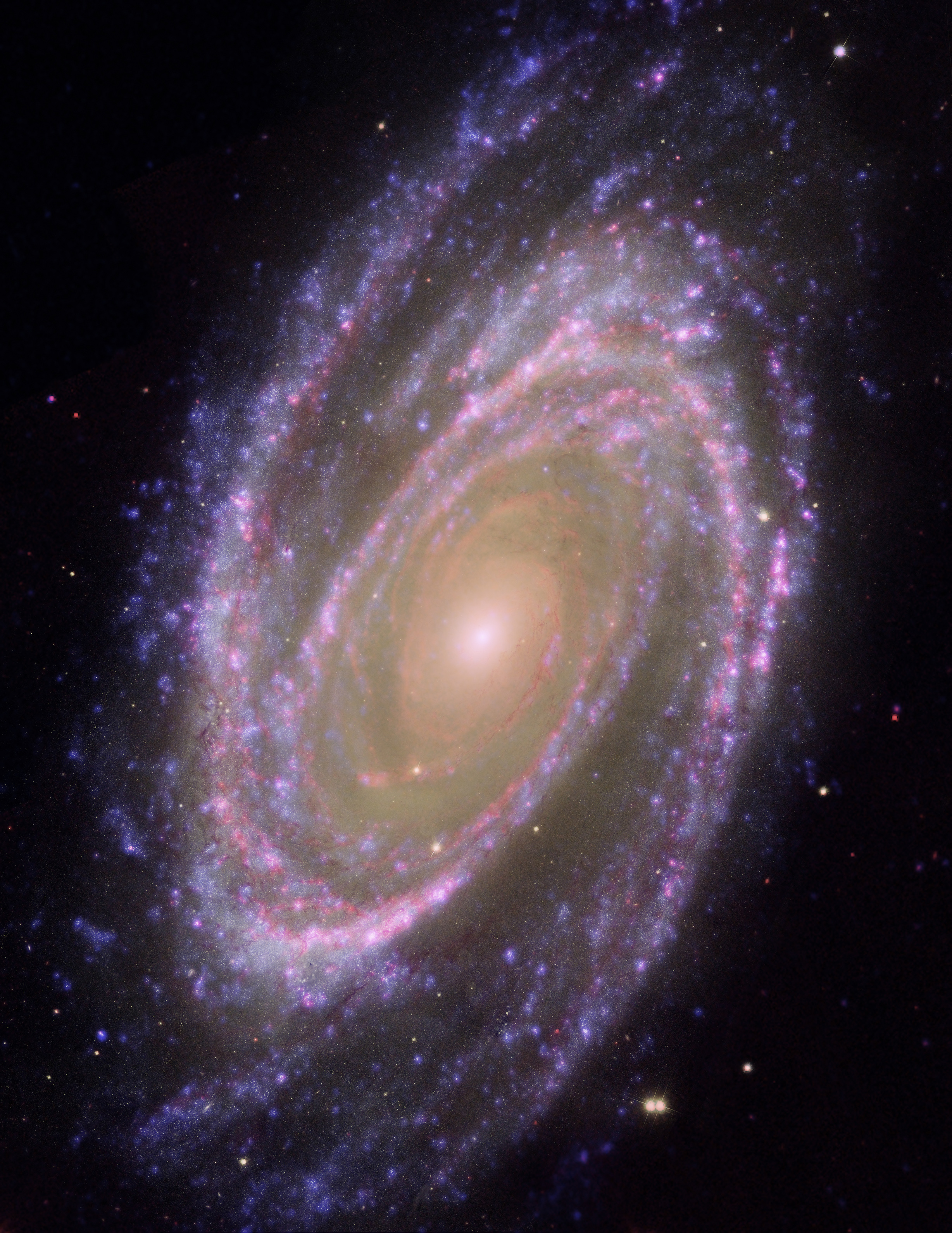 "NASA HST Image of the Large ""Grand Design"" Spiral Galaxy M81."