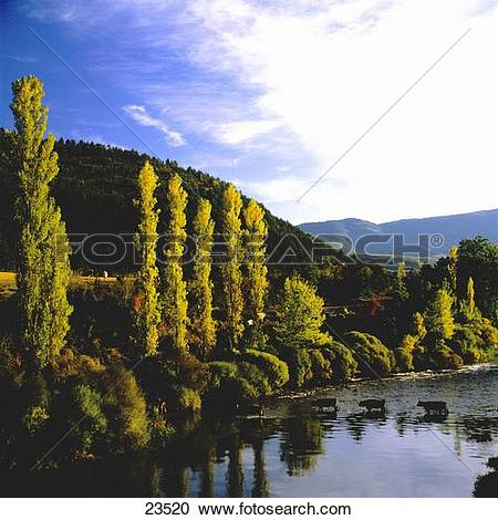 Stock Photography of Trees at lakeside, Pyrenees, Roncal Valley.