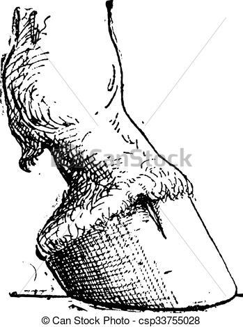 Vektor Illustration von Stich, Huf, Pferd, Weinlese.